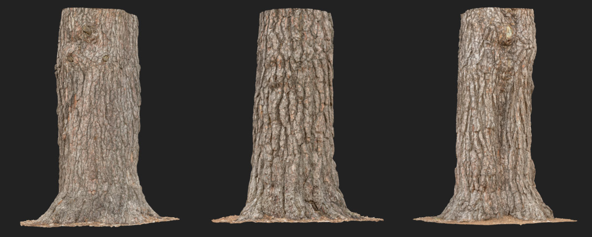 HyperTrees pinewood bark raw 3D scans